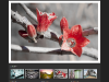 photographer web design 3